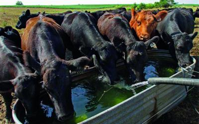 Livestock Watering image